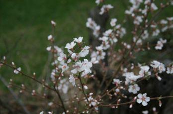 The long-awaited bling-bling of spring