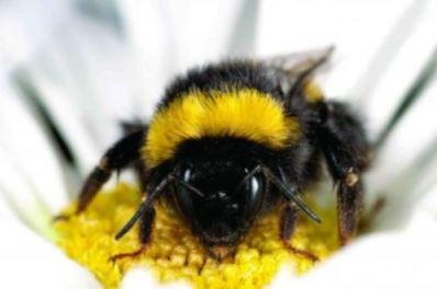 bumblebeeclose