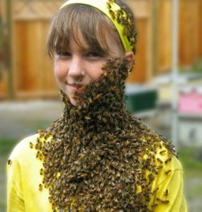 Wsu Bee Beard Experience