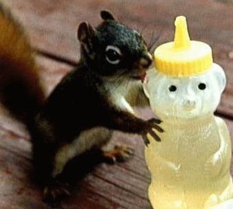 honey bear squirrel picnic