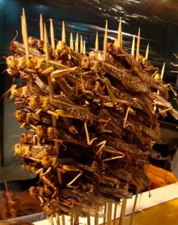Fresh skewered locusts. (Wiki.)