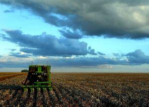 Amazon cotton field.