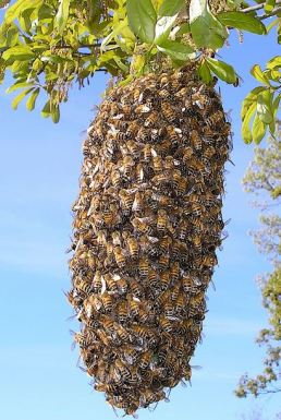 a hanging swarm