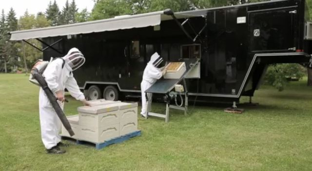 mobile pulling honey
