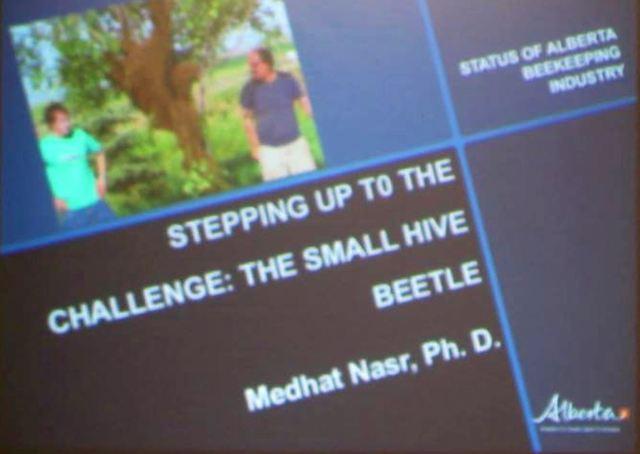 hive beetle slide 1