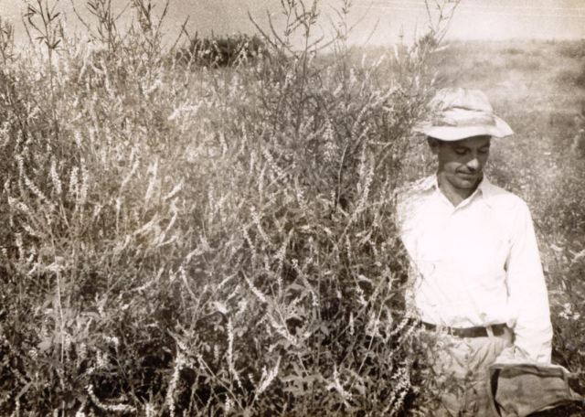 My father, in a patch of white sweet clover in a limestone strip mine in western Pennsylvania, 1950.
