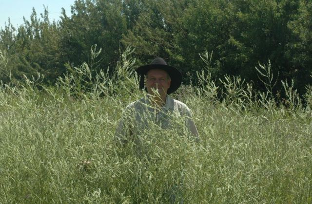 The author - outstanding in a field of sweet clover.