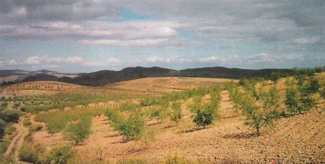 Spanish almond grove, 1993. From Juan Ramon Murua, et.al.