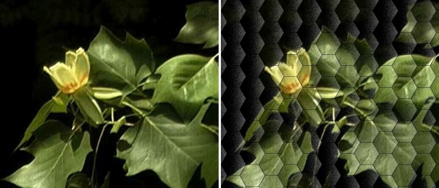 Bees see in mosaic hexagons, similar (but not quite the same) to what you is shown here.