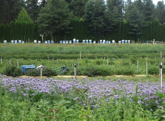 Arlo's Honey Farm, Kelowna, British Columbia