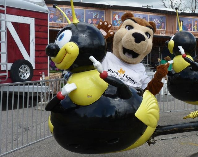 Pierre the Bear bothering a bee. You can't get much closer at catching the spirit of the Calgary Stampede!