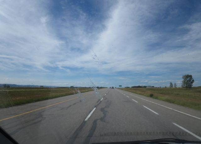 Bee collisions on an Alberta (Canada) highway. Can you spot all four?