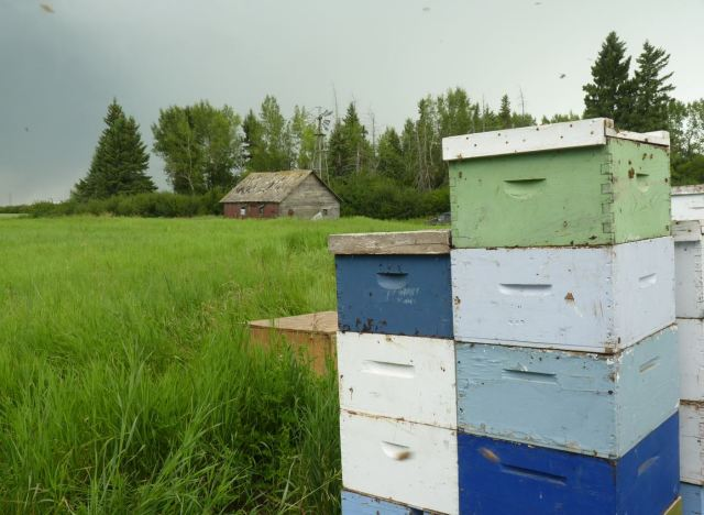 Neil keeps typical scenic Canadian apiaries.
