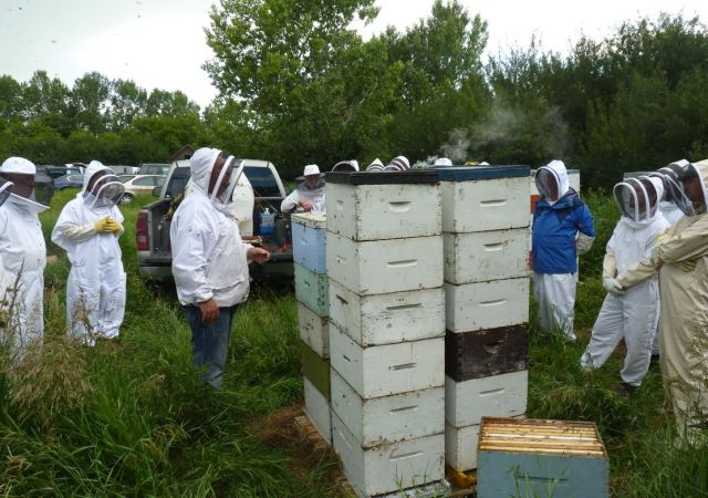 Neil Bertram apiary - Saturday at the Hive visitors