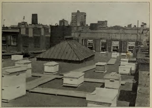 NYC rooftop apiary, 1905