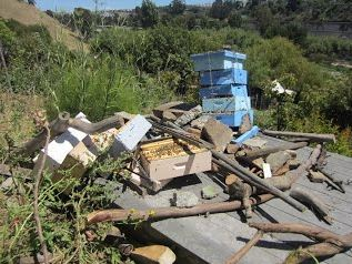 It happens everywhere: These hives were near San Francisco.