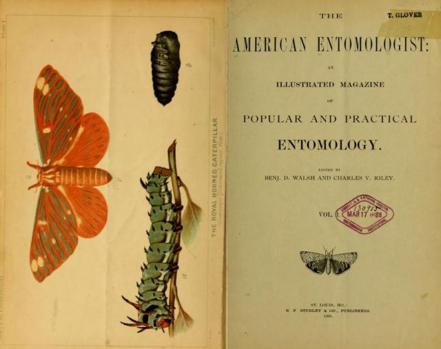1868-the-am-entomologist