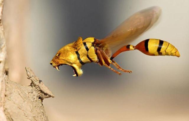 angry-wasp