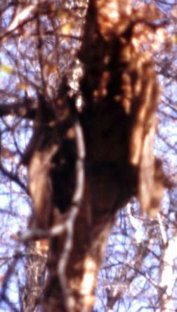abandoned-nest