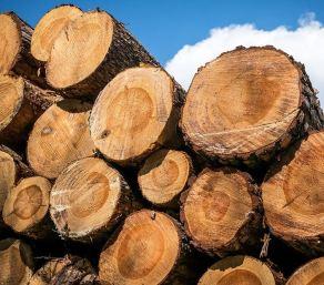 -alberi tagliati
