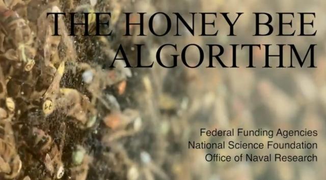 honey-bee-algorithm-title