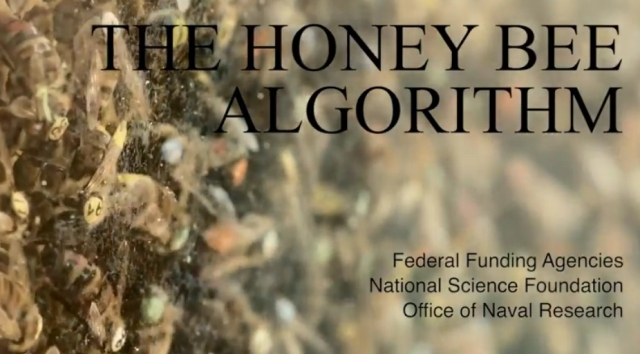 honey-bee-algorithm-title