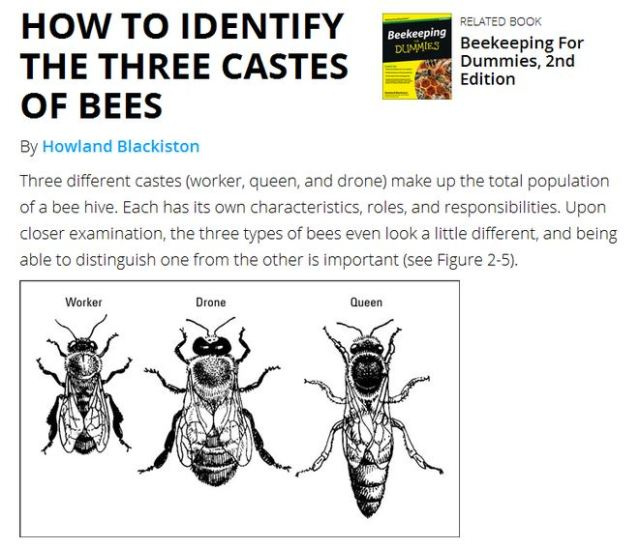 Believing that honey bees have three castes is for Dummies. But you know better.