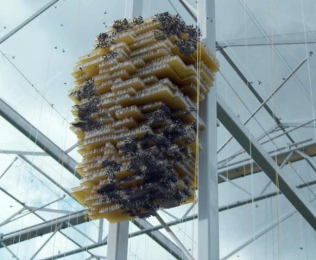 robo-bees-4
