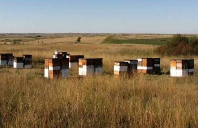 North Dakota Apiary (credit: Midwest Bee Team of Bee Informed)