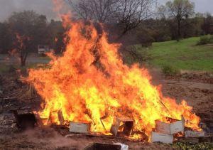 burning-foulbrood
