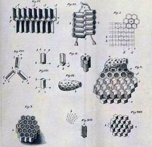 swammerdam-comb-cells-3