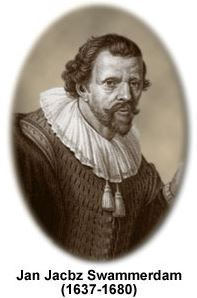 There are no pictures of Swammerdam, but this image Hartman Hartmanzoon (1591–1659) is usually placed in text books with his name under it.