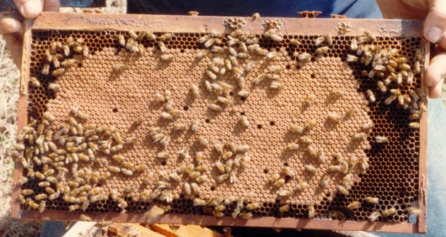 Good Queen; Bad Queen | Bad Beekeeping Blog