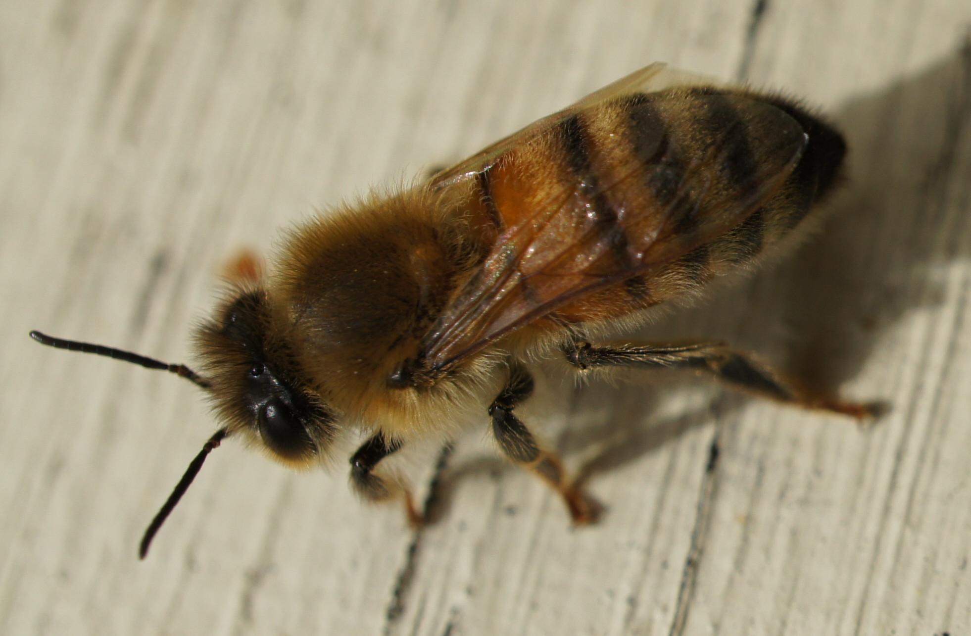 international workers� day bad beekeeping blog