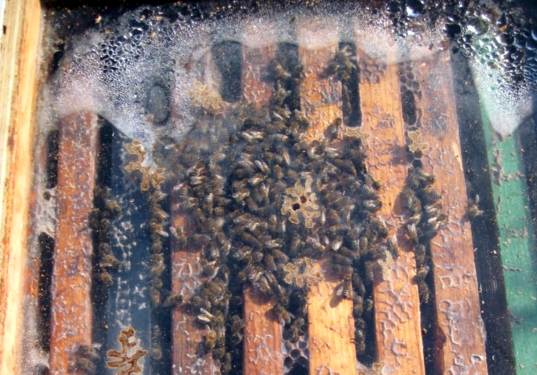 Why Are Hives Damp In The Winter Bad Beekeeping Blog