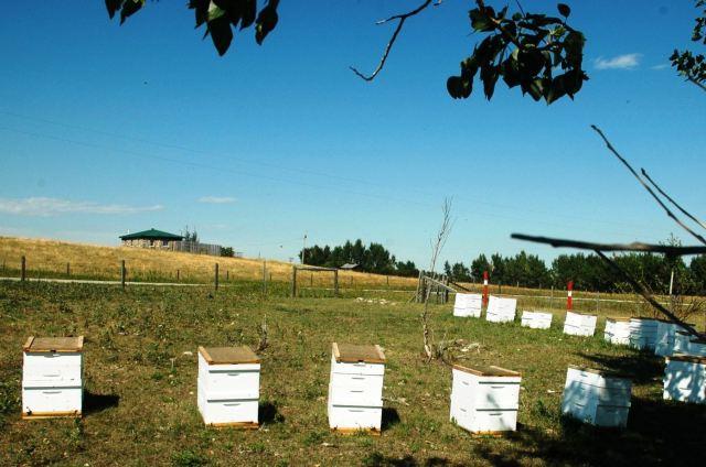 Bees near Ian's